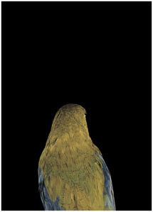 Bad Bird #2