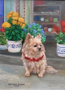 Shop Dog in Pompi