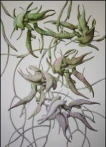 Florilegium - Folio VI