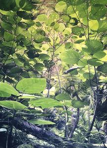 Secret Undergrowth