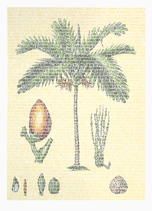 Richard Arecaceae