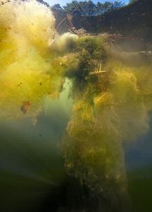 L'écume d'étang (série Underworld)