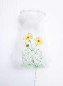 Thumbergia alata homo (da série: Minha coleção de sementes Daninhas, 2006/2016)