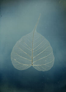 "Untitled #5, Bodhi leaf, from the series, ""Aura of Botanical Specimen"""