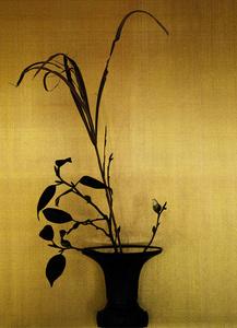 camellia / japanese pampas grass