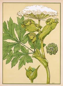 Floral Pochoir 6