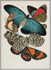 Butterfly Pochoir 02