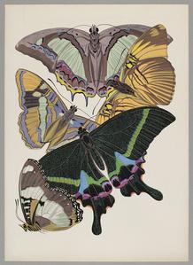 Butterfly Pochoir 10