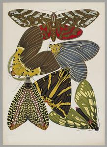 Butterfly Pochoir 03