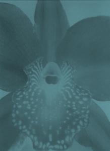 sans titre (abstract orchis negative blue)