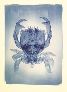 Frog Crab