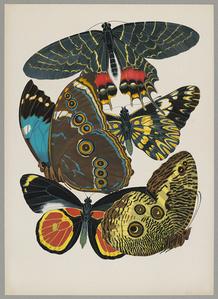 Butterfly Pochoir 08