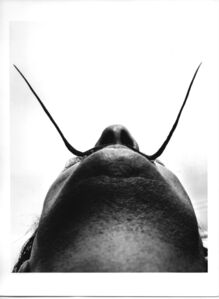 Dali as seen by his psychoanalyst