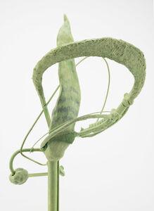 Green Orbits (Snake Plant)