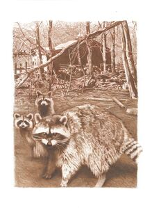 Coon Family