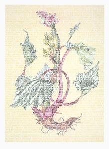 Lili Polygonaceae