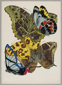 Butterfly Pochoir 04