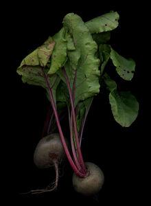 Rote Beete (Beta vulgaris)