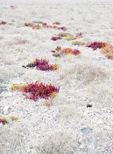 ANALYSIS OF THE HIDDEN FLOWERS