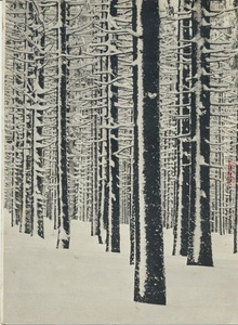 Winter in the pine tree forest