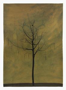 Falso hombre árbol (Comadre)