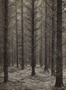 Spätherbst im Fichtenwald