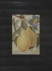 Achterdijk. 1966. Pears of Achterdijk (Fondante de Charneu of Legipont)