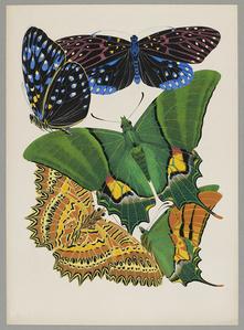 Butterfly Pochoir 09