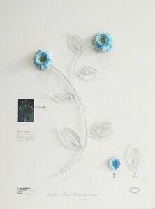 Herbário de plantas artificiales - Expedición Venezia - Flor Azul