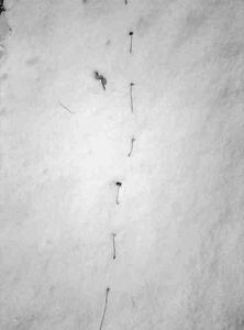 Untitled (Snow)