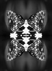 Papiliones No 9