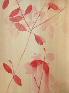 Lantana (Red)