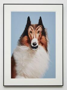 Reconstructed Lassie