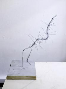 PISA (Hallucigenia Modell)
