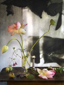 Lotus 2 Pmaha