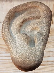 Ear (large size)