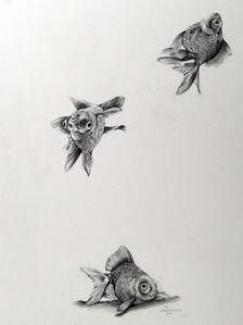 Falling Goldfish