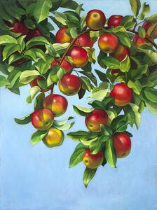 Orchard McIntosh