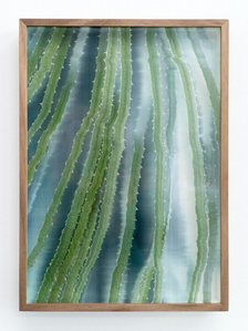 Botanical Frottage - Pilar (Oaxaca series)