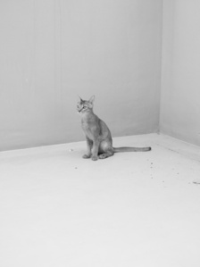 Cat 1 from the series Disappearance