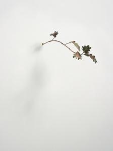 Pinocchio Leaves (oak)