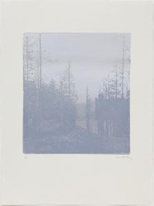 Landscape 44