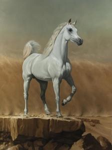 5. Young Arabian Stallion
