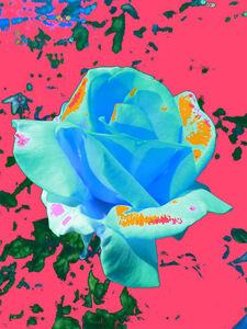 Night Flower (Pink)