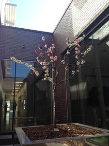 Tree planted at Hotel 21C, Bentonville, AR