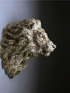 Balance - Lion B