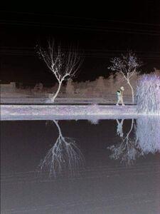 Fish Pond Mirror