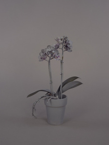 Neutral Orchids (Phalaenopsis, small)