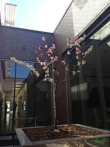 Tree planted at Hotel 21C, Bentonville, AR