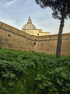 Vaticano 14